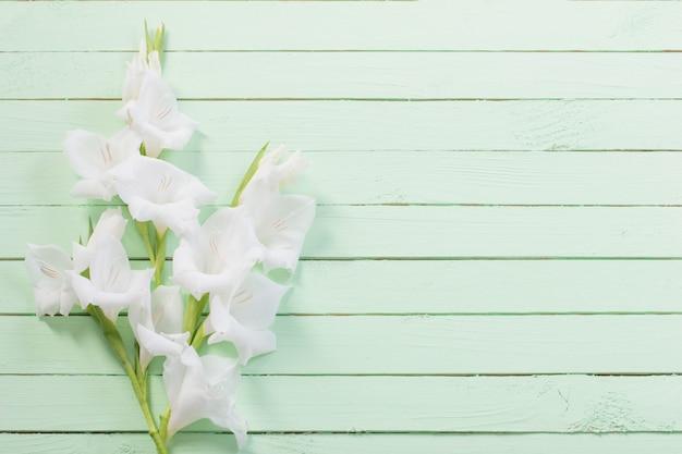 Glaïeul blanc sur une surface en bois verte