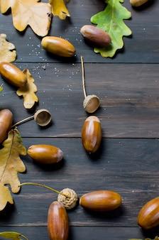 Glands et feuilles de chêne