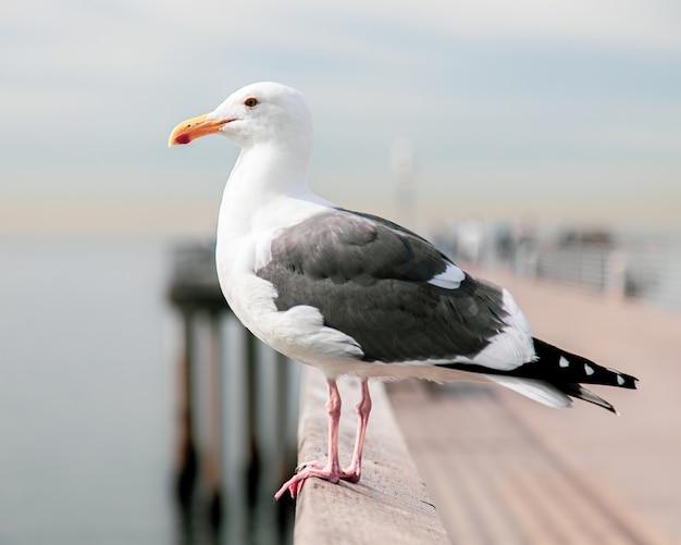 Goéland marin avec un arrière-plan flou