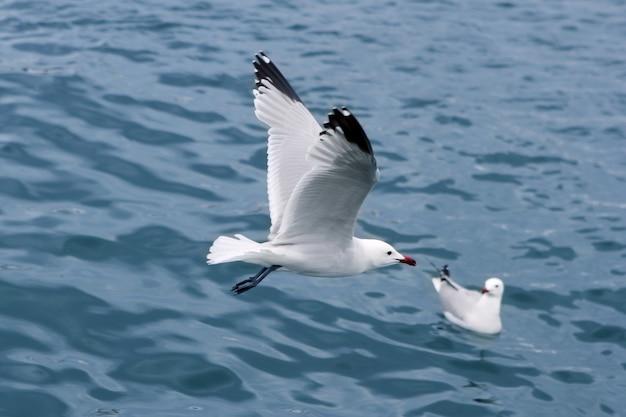 Goélands actifs mouettes au-dessus de la mer bleue