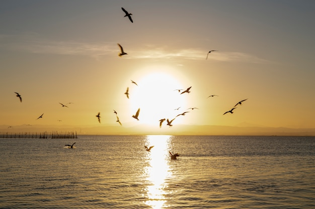 Goélands à tête noire et coucher de soleil à albufera de valence avec le soleil au milieu.