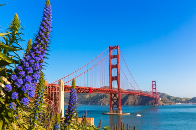 Golden gate bridge san francisco fleurs violettes californie