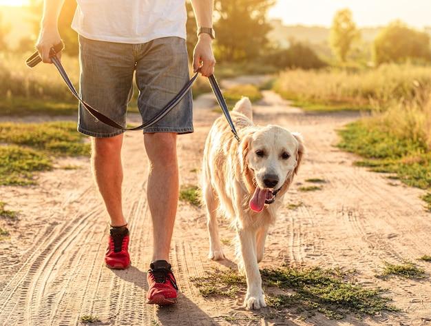 Golden retriever marchant à côté des jambes de l'homme le long de la route au sol