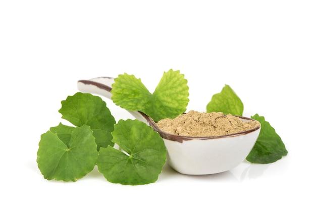 Gotu kola ou centella asiatica feuilles vertes et poudre isolées sur une surface blanche.