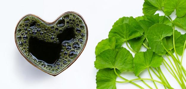 Gotu kola laisse du jus pour la santé sur une surface blanche. vue de dessus