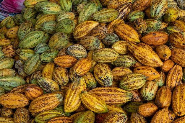 Gousse de cacao frais cru, gousses de cacao gousses de cacao fond organique.