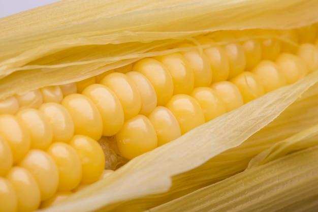 Gousses de maïs jaunes prêtes à manger sur un fond blanc.
