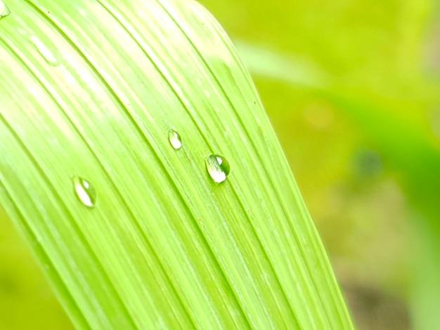 Goutte d'eau sur une feuille verte le matin avec la lumière du soleil. sentez-vous frais.