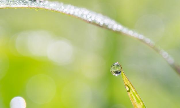 Goutte d'eau sur feuille verte