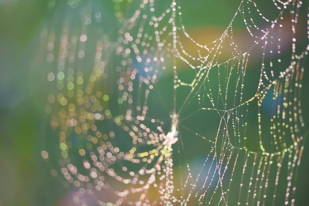 Goutte de pluie toile d'araignée floue naturelle abstrait coloré fond de jardin arc-en-ciel