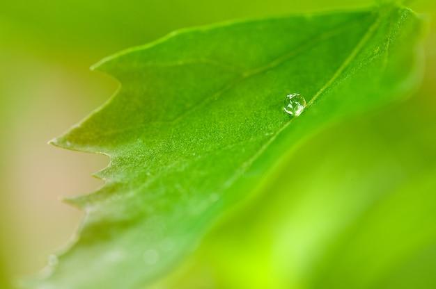 Goutte de rosée sur une feuille verte