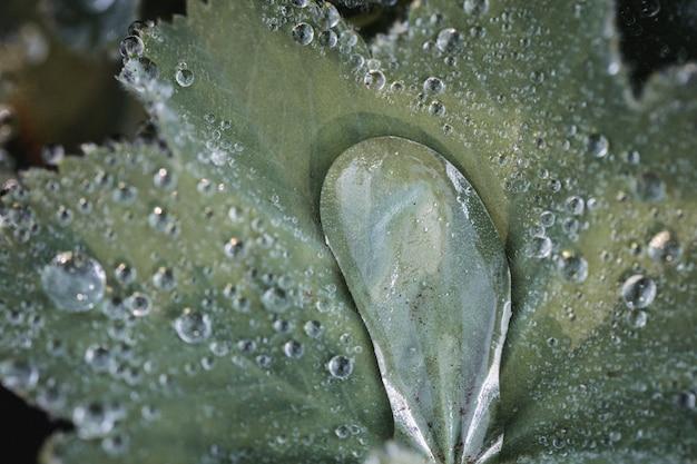 Gouttelettes d'eau sur feuille verte