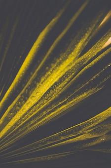 Gouttelettes d'eau sur les feuilles vertes