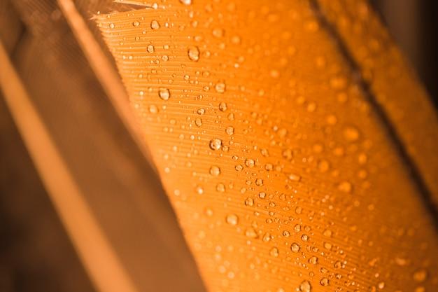 Gouttelettes d'eau sur le fond texturé doré de surface