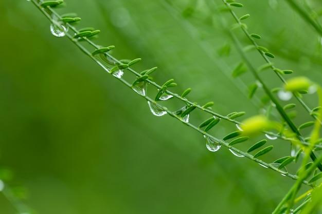 Gouttelettes d'eau sur l'herbe verte.
