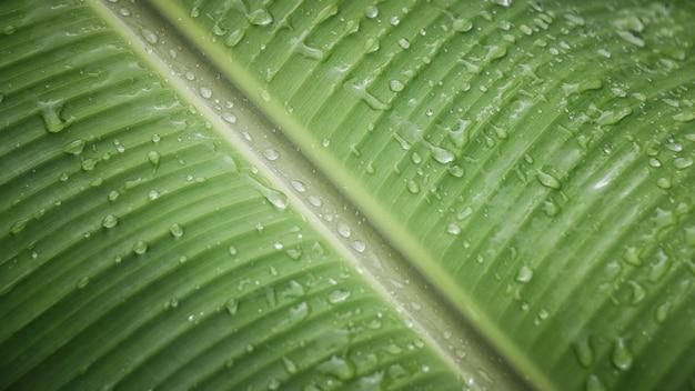 Gouttes d'eau sur le détail des feuilles