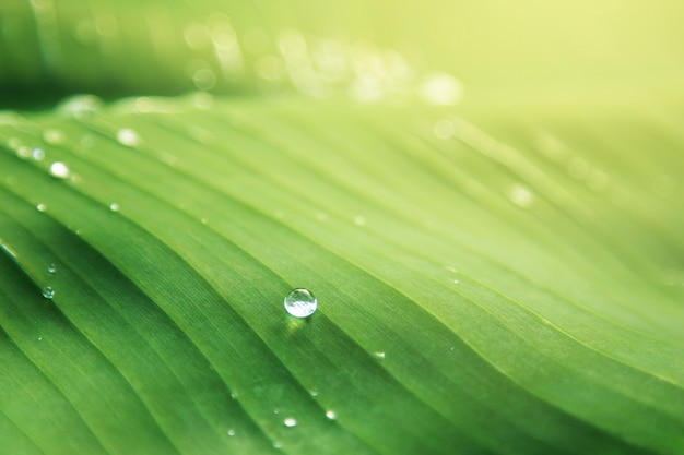 Gouttes d'eau sur les feuilles et les branches naturelles après la pluie avec une belle lumière