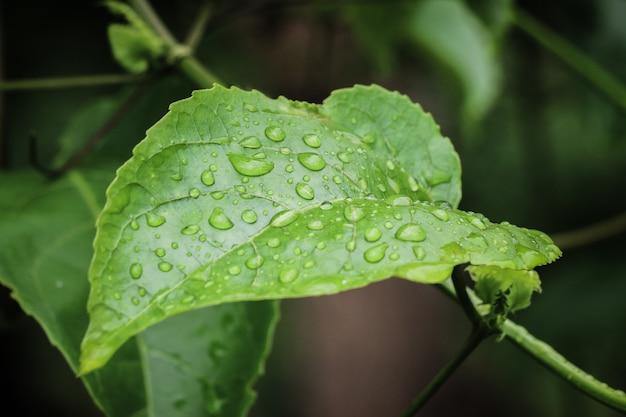 Gouttes d'eau sur les feuilles dans la nature