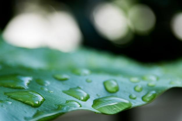 Les gouttes d'eau sur les feuilles laisse un espace vide et flou