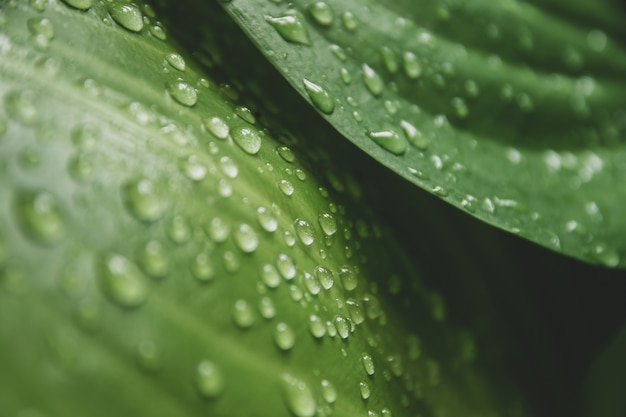 Gouttes d'eau sur les feuilles vertes.