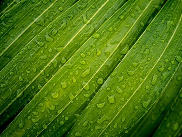 Gouttes d'eau sur les feuilles vertes