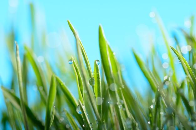 Gouttes d'eau sur l'herbe verte contre le ciel
