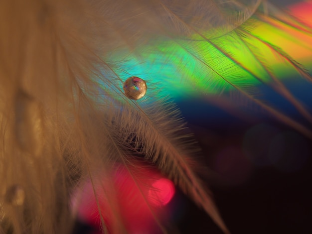 Gouttes d'eau sur une plume d'oiseau