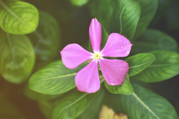 Gouttes de pluie sur la fleur blanche