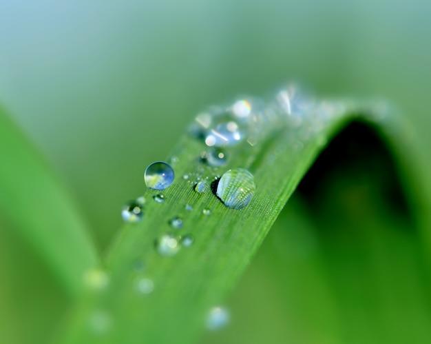 Gouttes de pluie sur l'herbe