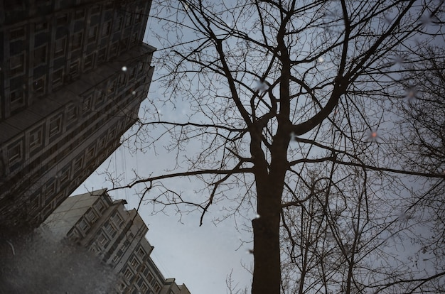 Des gouttes de pluie ondulent dans une flaque d'eau avec des reflets de bâtiments, de ciel et d'arbres.
