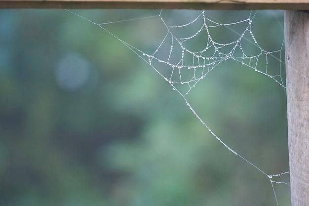Gouttes sur la toile d'araignée dans la nature