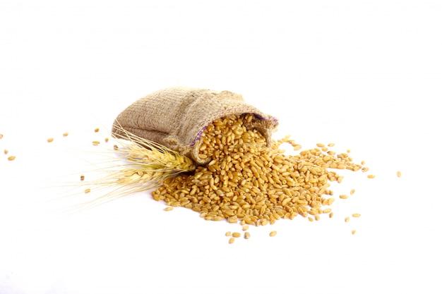 Grain de blé dans un sac