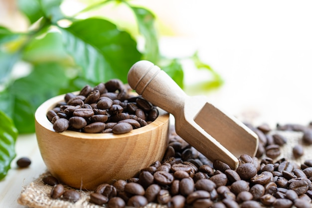 Grain de café moyennement torréfié dans un bol en bois avec des feuilles fraîches le matin.