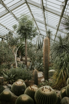 Grain de film rétro à effet de serre de cactus, à kew garden, londres
