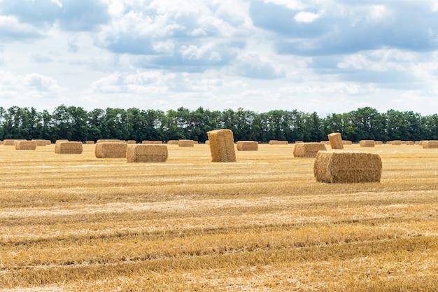 Grain récolté, champ de céréales, avec des bottes de foin en balles de paille