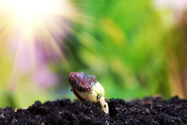 Graine à arbre, ensemencement, concept de culture de semences de plantes