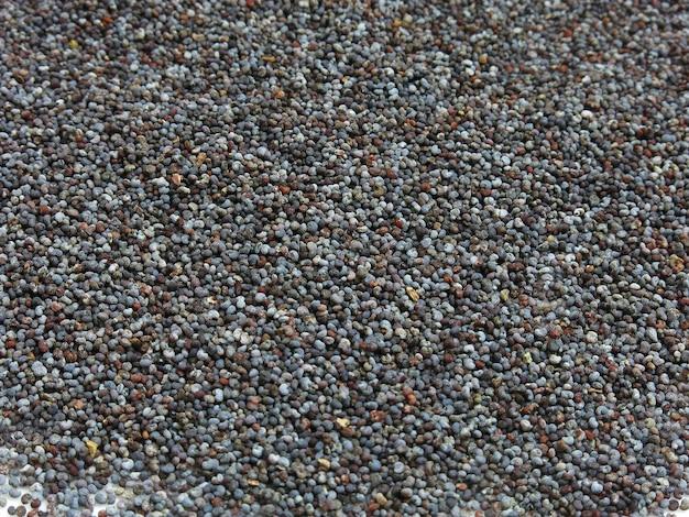 Graine de pavot une graine oléagineuse obtenue à partir du pavot à opium (papaver somniferum)