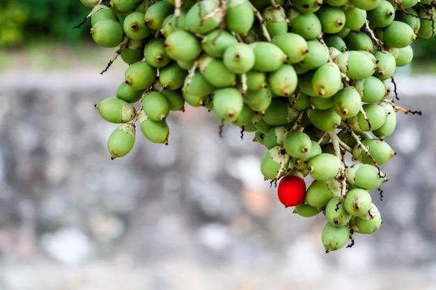 Graine rouge et nouvelle graine verte