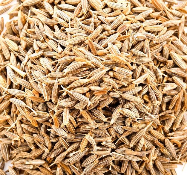 Graines de carvi