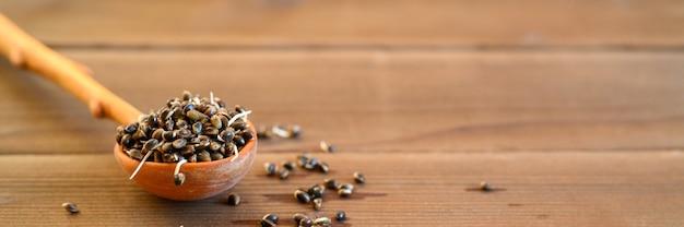 Graines de chanvre germées dans une cuillère en bois sur un fond en bois. bannière