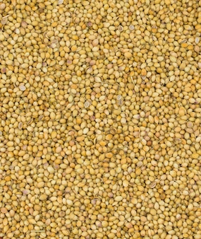 Graines de coriandre séchées ou dhaniya