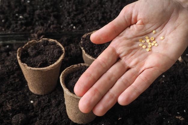 Les graines dans ma main contre le sol.