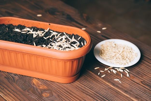 Graines dans un pot de fleurs sur une table en bois