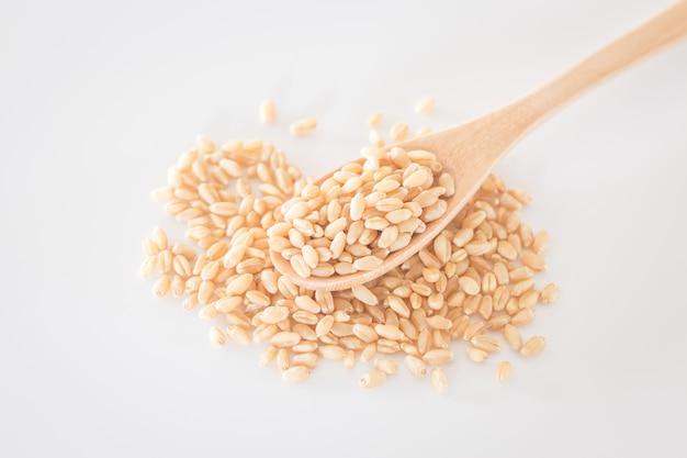 Graines d'herbe de blé bio pour animaux de compagnie