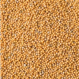 Graines de moutarde blanche, peut être utilisé fond