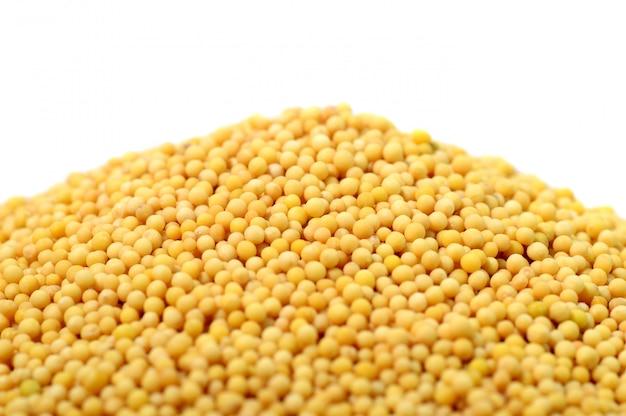 Graines de moutarde jaune sur fond blanc