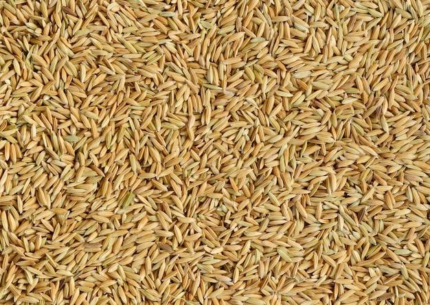 Graines de riz gluant pour le fond