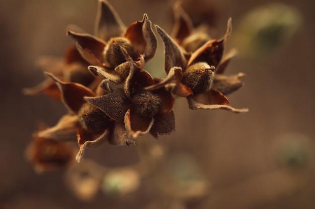 Graines sèches d'arbres à feuilles persistantes avec un arrière-plan flou