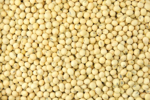 Les graines de soja empilées se bouchent