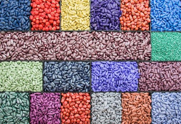 Graines de tournesol, maïs, radis. couleur agro peinte pour le tri et l'étiquetage
